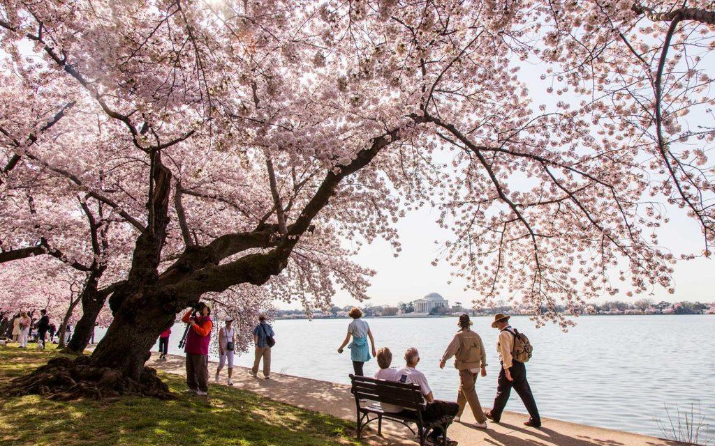 Kinh nghiệm du lịch Washington - ảnh 1